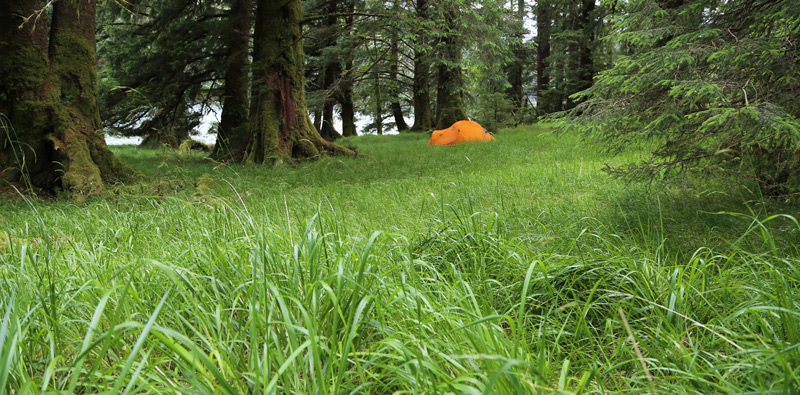 Tent in the tall green grass at Kitgoro Inlet.