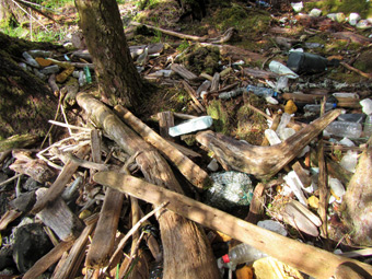 Lots of plastic bottles and other items washed up in the driftwood.