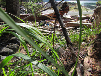 Looking out from the forest at the car wheel and more garbage washed up amoung the diftwood on the beach.