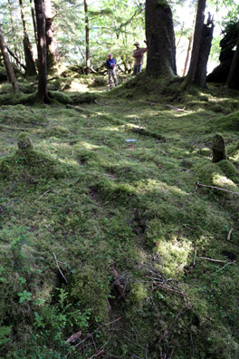 Bear foot prints in the moss.